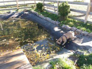 Urlalub mit Hund in Tirol