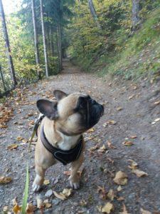 Urlaub mit Hund in Tirol