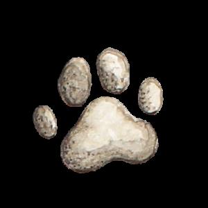 Pfote_transparenter-Hintergrund_Aram-und-Abra-300x300 Gesundes Hundefutter - was gehört da nicht rein?