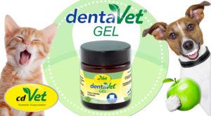 dentaVet_Gel6821-300x166 Testbericht - Zahnstein beim Hund